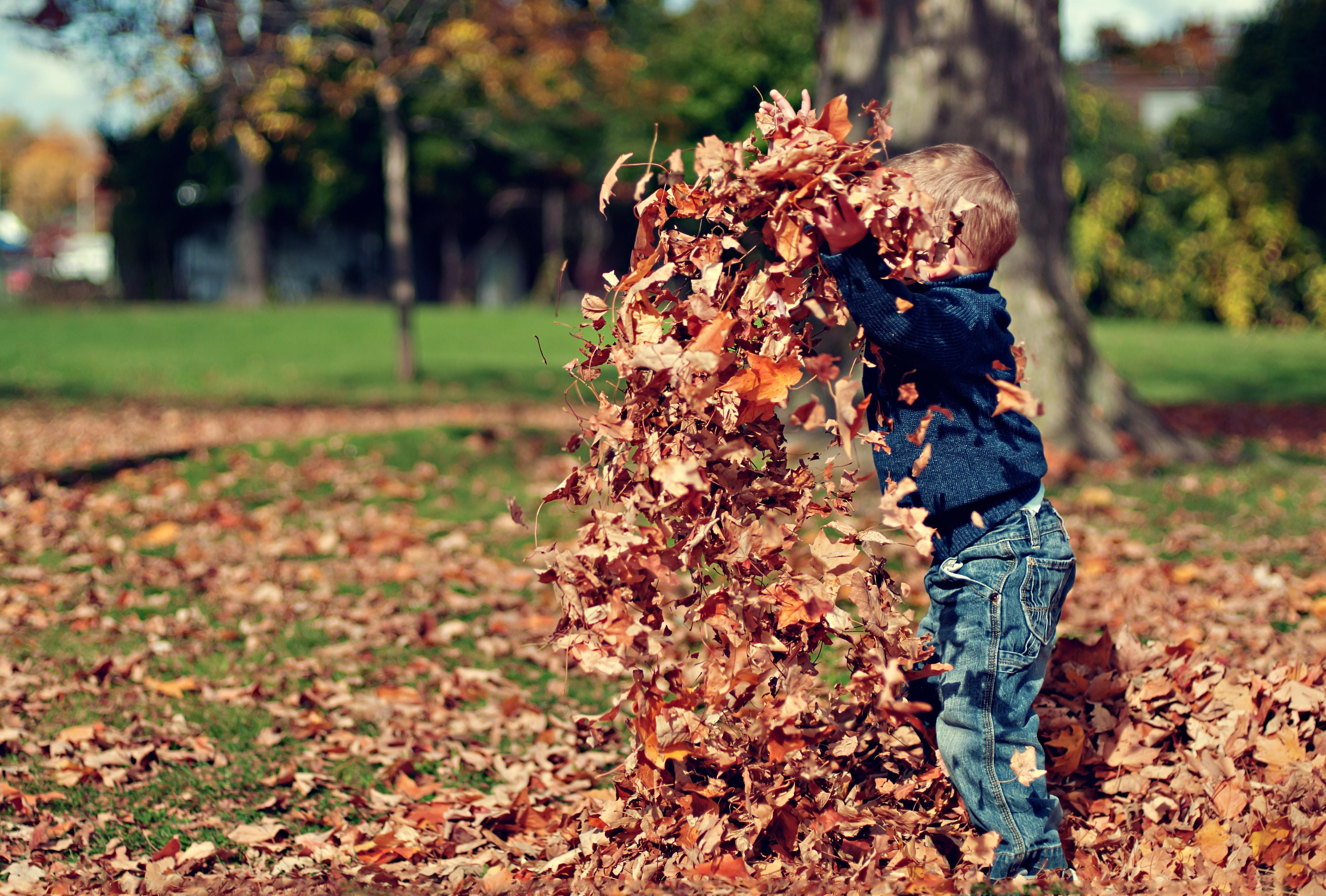 Herbstaktivitäten