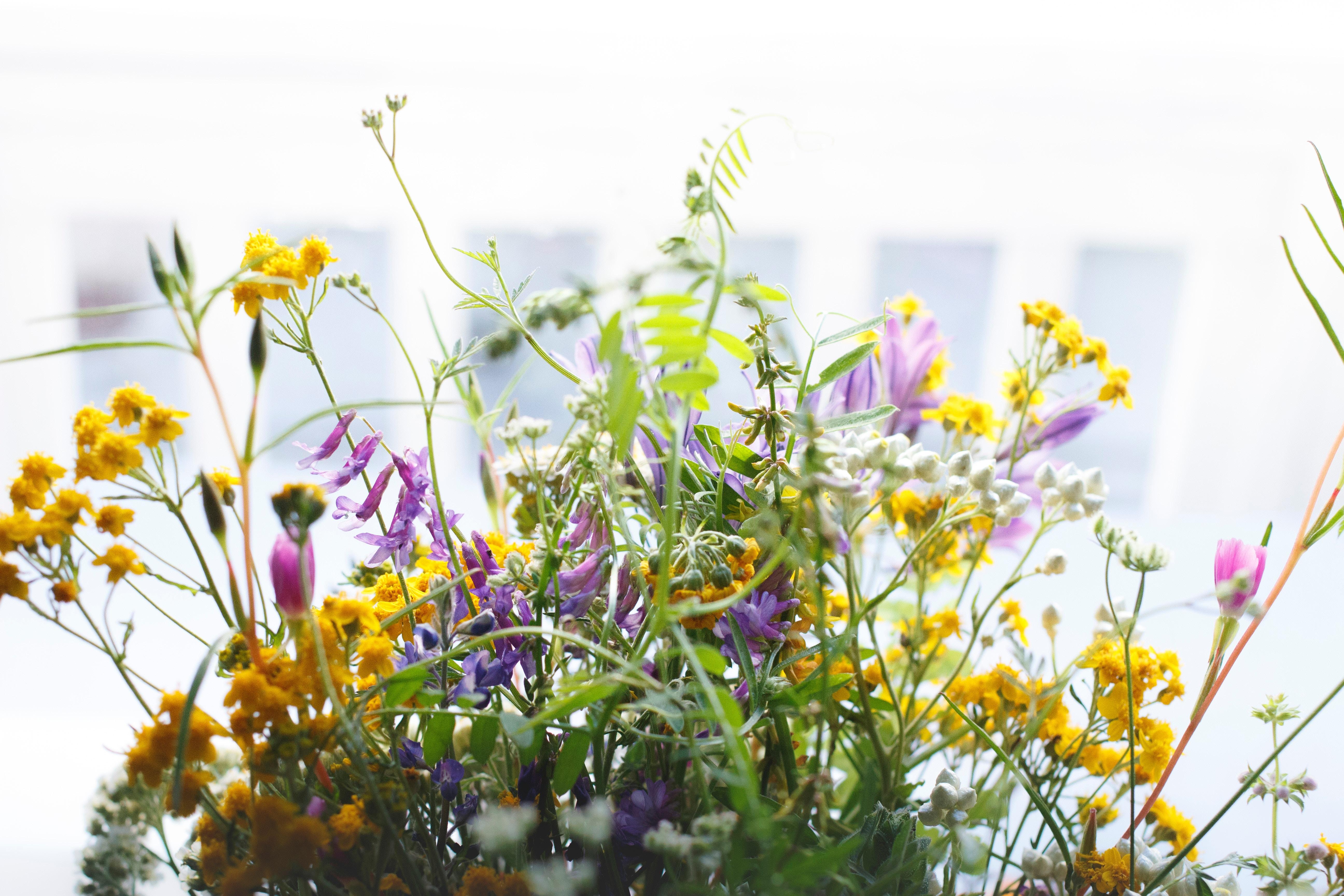 Wie Sie Ihren Kindern mehr über Kräuter, Pflanzen und Blumen beibringen