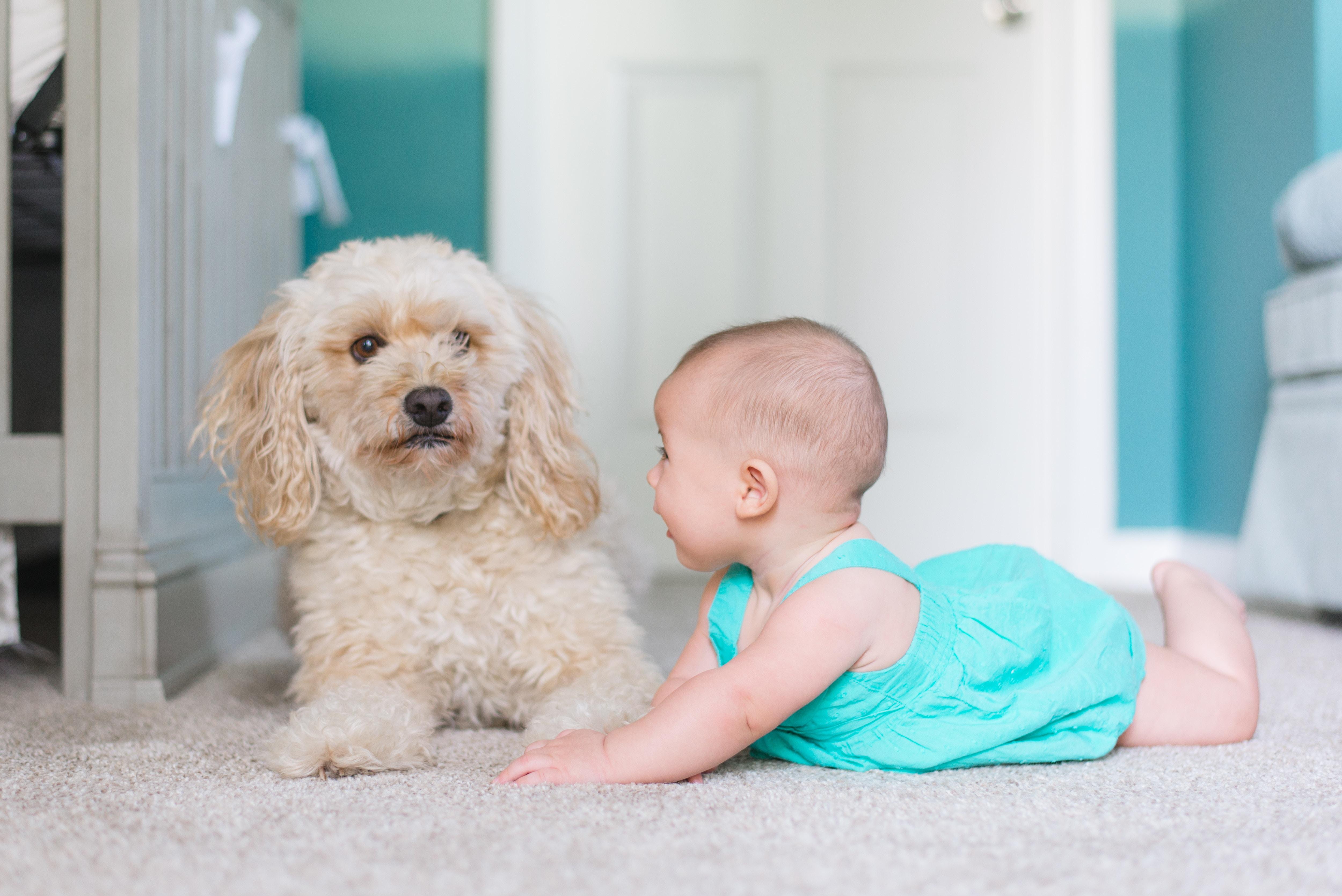 4 gute Gründe, wie Ihre Kinder von einem Haustier profitieren können