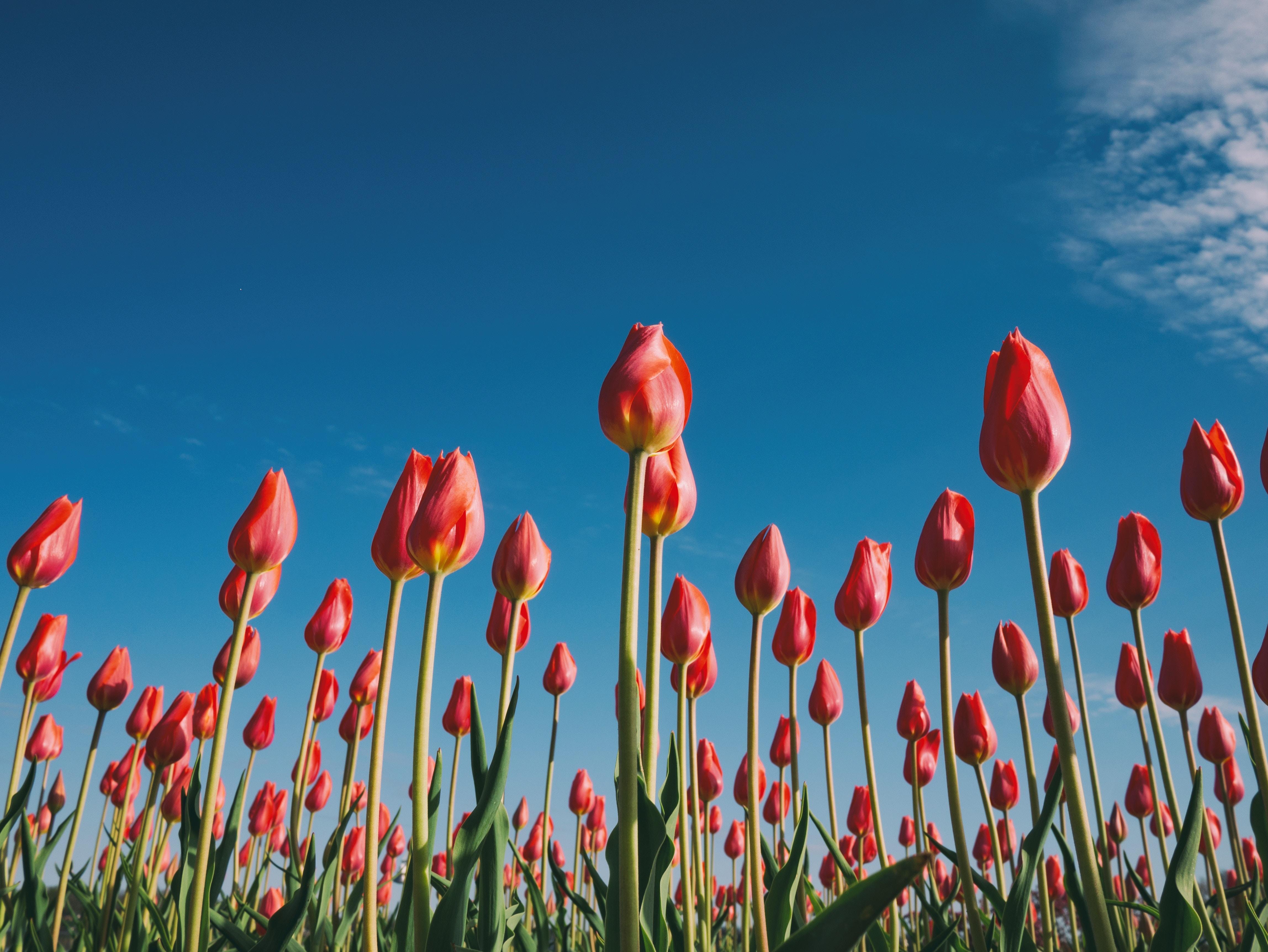 Hallo, Frühling! 6 Frühlingsaktivitäten für Kinder